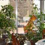 Китайски ресторант София | Китайски дракон